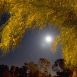 Full Moon and Tree at Mira Costa College in Oceanside California