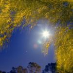 Full Moon and Tree at Mira Costa College in Oceanside, Californi